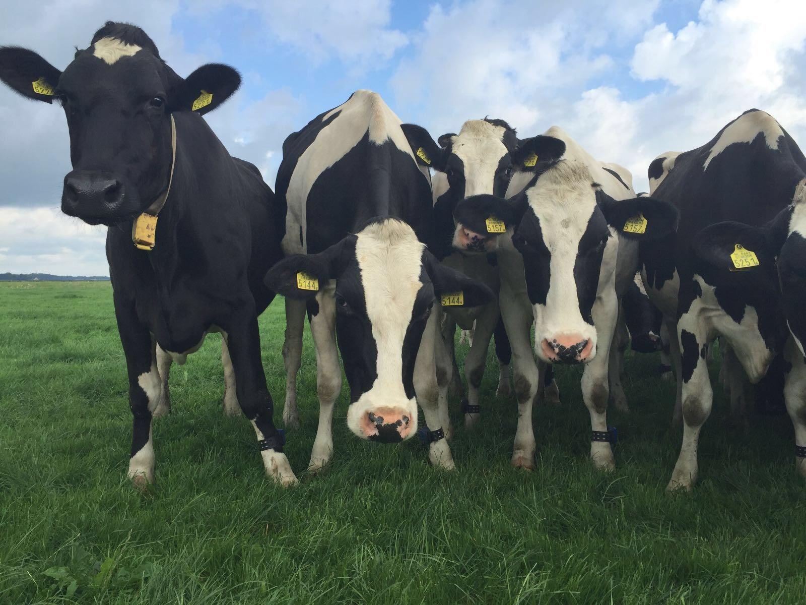 'Naar kringlooplandbouw: zo wil ik het aanpakken'