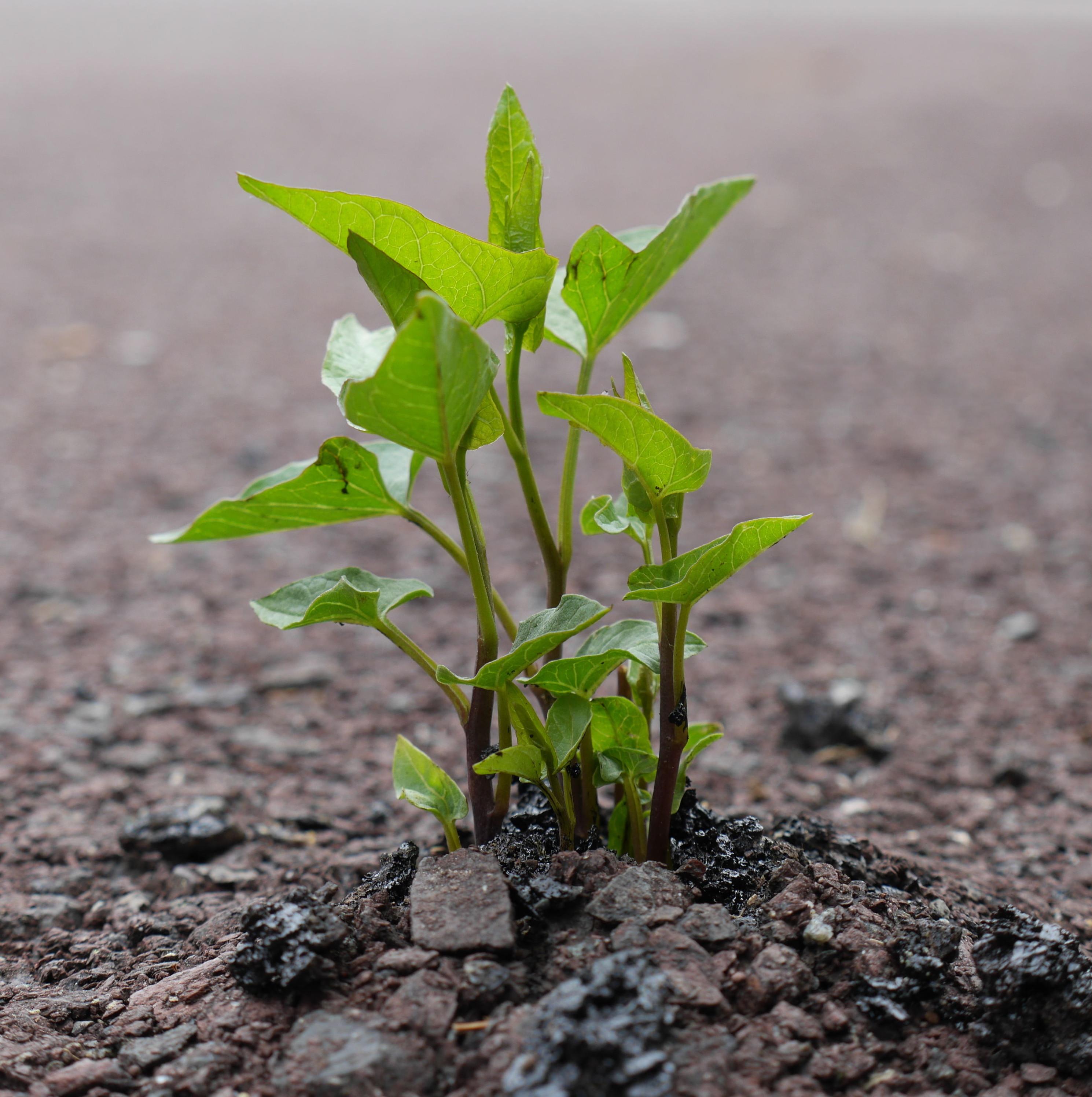 Boerenverstand in plantgezondheidsverordening