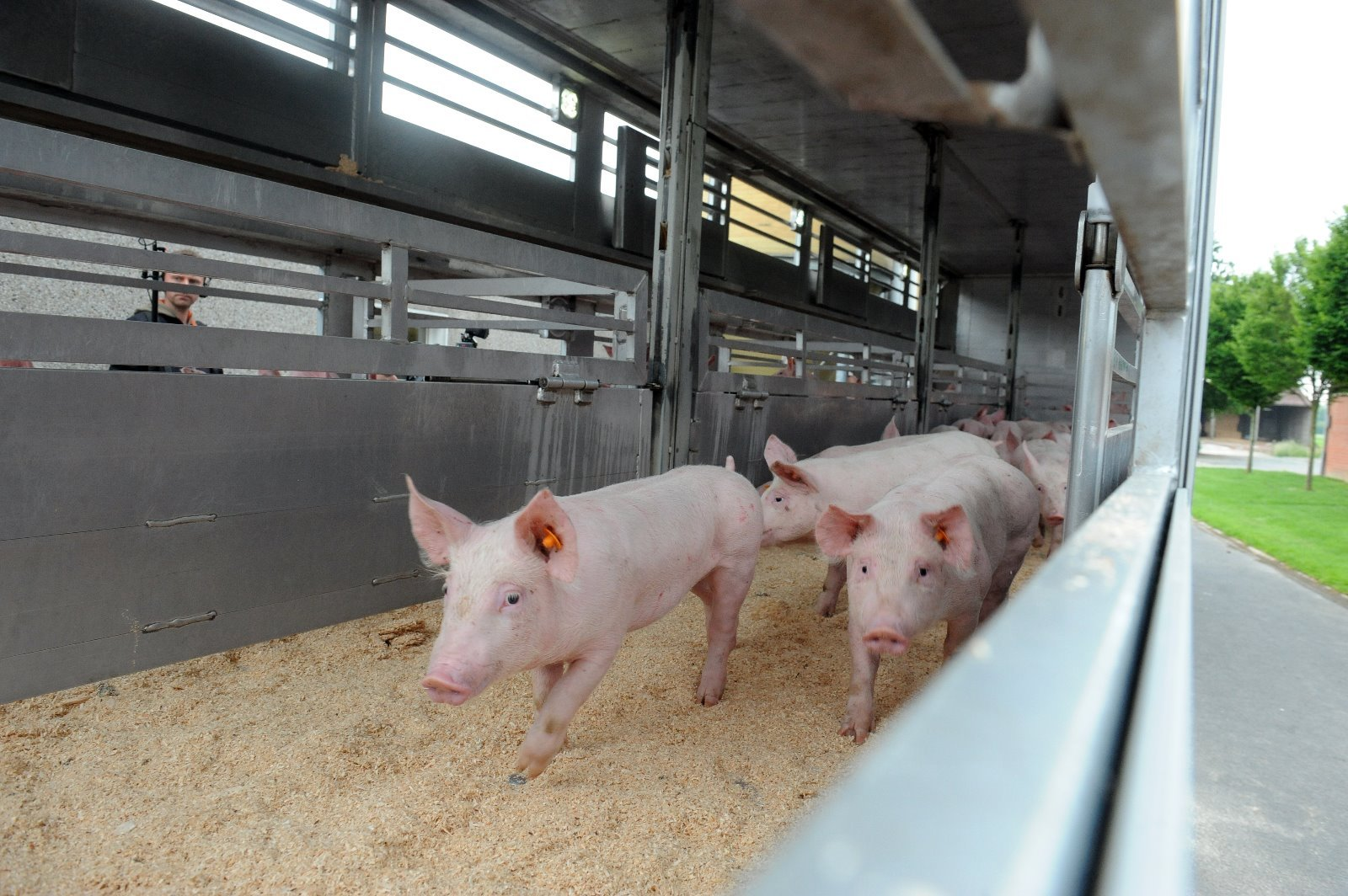 Persbericht: Europees parlement wil bordeskeuringen en Schengen voor varkens