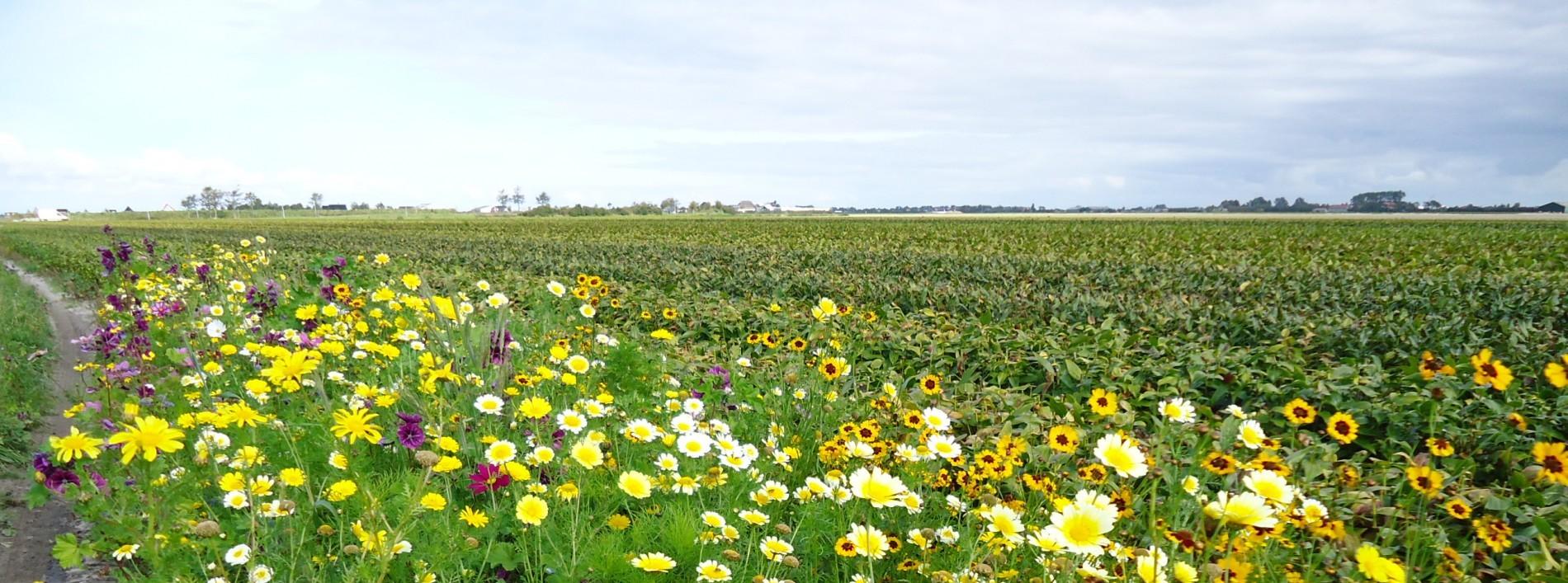 Persbericht: Nieuw Europees landbouwbeleid moet boer het stuur weer in handen geven